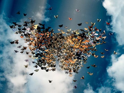 La mia storia - Aida • VULVODINIA.INFO Farfalle